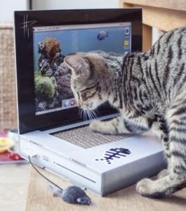 Cumpara un laptop pentru pisica ta
